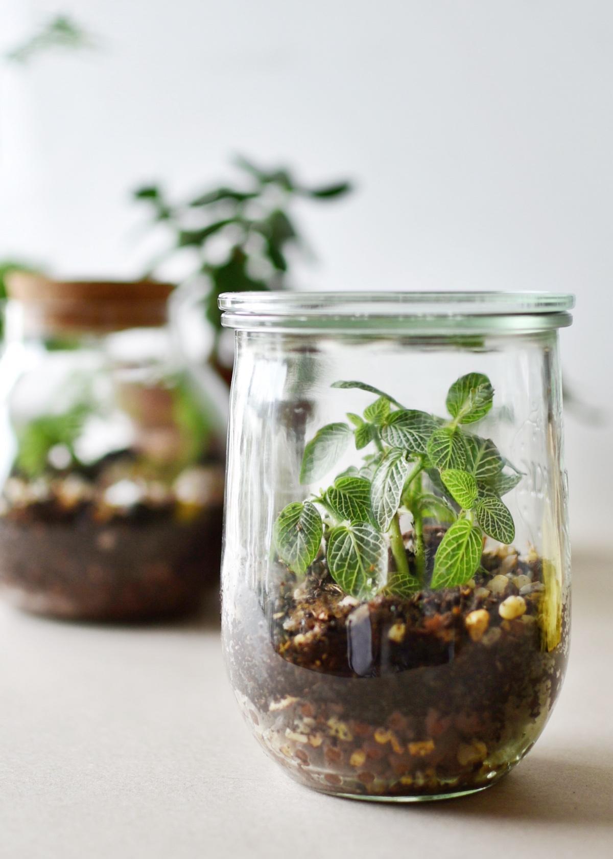 comment faire un terrarium facilement dans un pot en verre de recupération